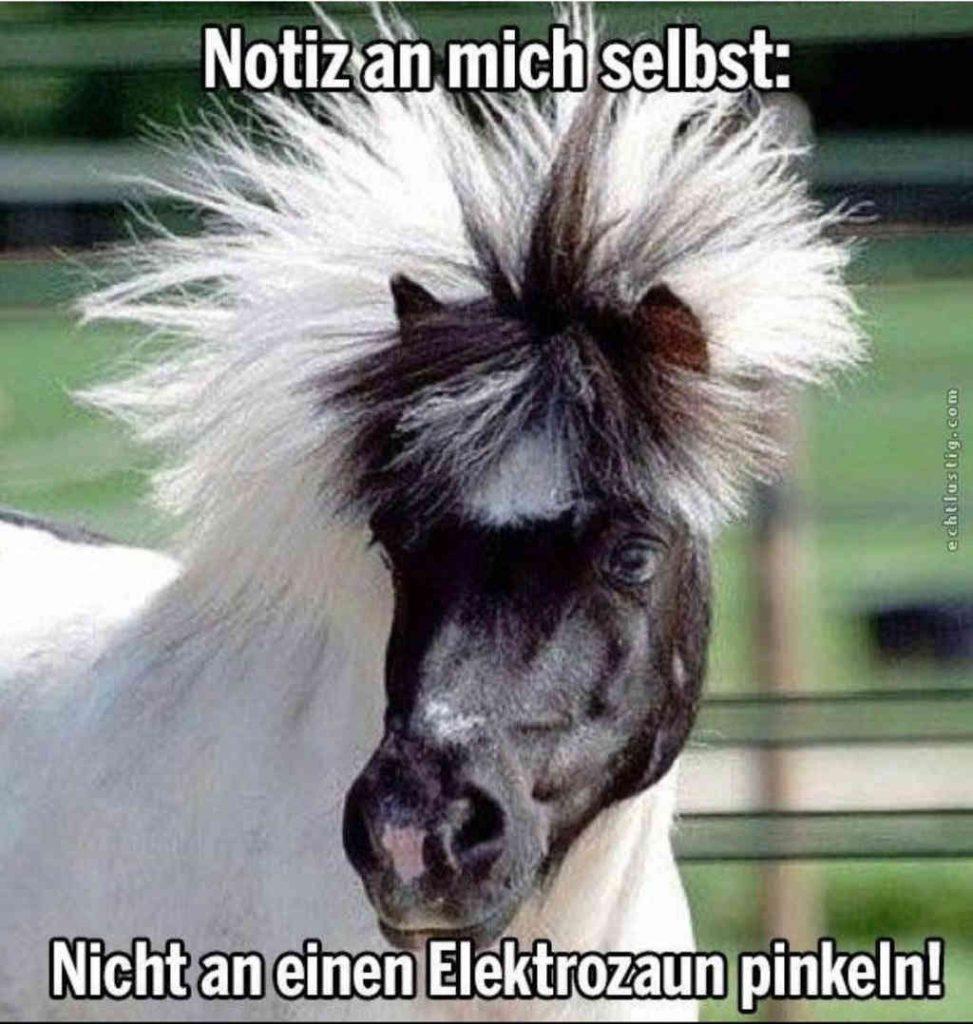 Warum sollten ncicht auch Pferde die gleiche Erfahrung mit dem Elektrozaun machen wie unsere Männer.