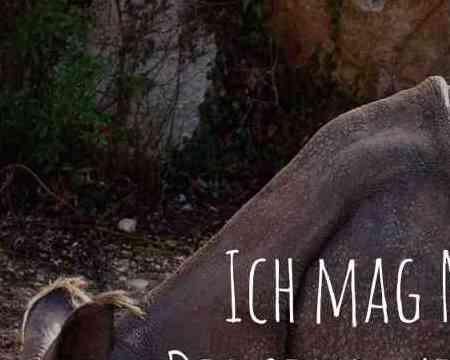 Mit der richtigen Fantasie sieht man doch eine gewisse Ähnlichkeit zwischen Nashörnern und Einhörnern.