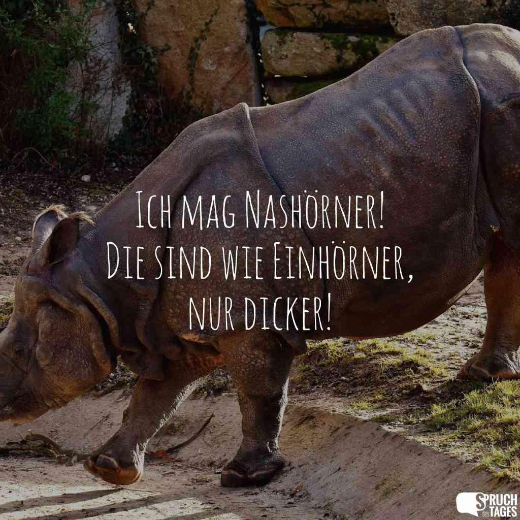 Nashörner sind wie Einhörner, lediglich etwas dick!
