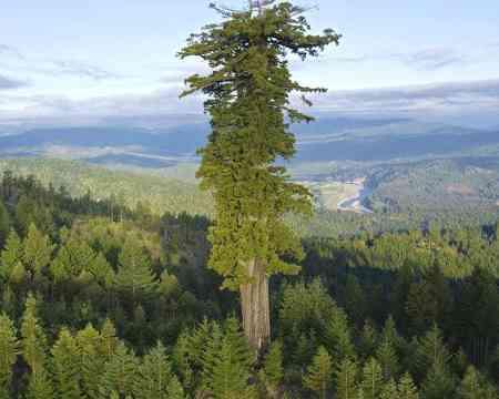 Fast so alt die MEnschheit sind einiger dieser unglaublichen Bäume die in diesem genialen Video vorgestellt werden.