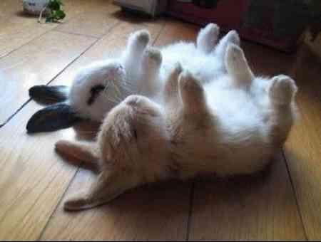 Einfach total lustig wievielen Tieren man das Totstellen nach einem Finger Shot beibringen kann.
