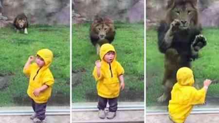 Schaut dieses lustige Video unbedingt bis zum Schluss an. Unglaublich wie die Zootiere auf die Kinder reagieren.