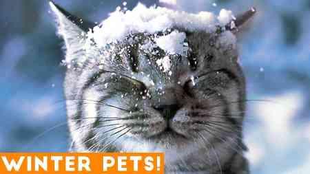 Lustiger Spaß im Schnee von verschiedensten Tieren bringt euch mit Sicherheit zum Lachen.