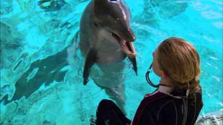 Mit Hilfe von ELVIS kann dieser unglaubliche Delphin Entscheidungen treffen und Fragen zu beantworten.