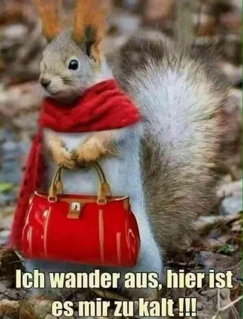Wenn selbst Eichhörnchen das Land verlassen wollen, ist es wohl doch etwas kalt.