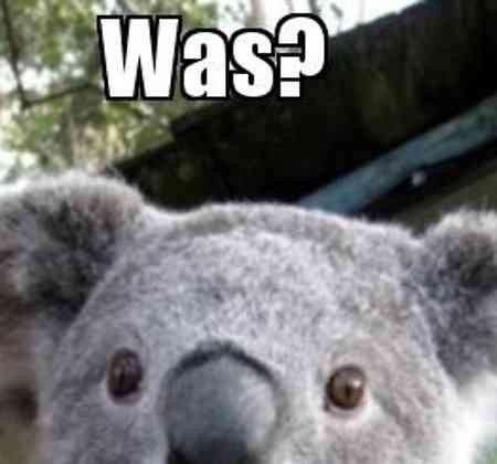 Das Wochenende ist bereits, wenn es anfängt fast vorbei, auch dieser Koala hat es gemerkt.