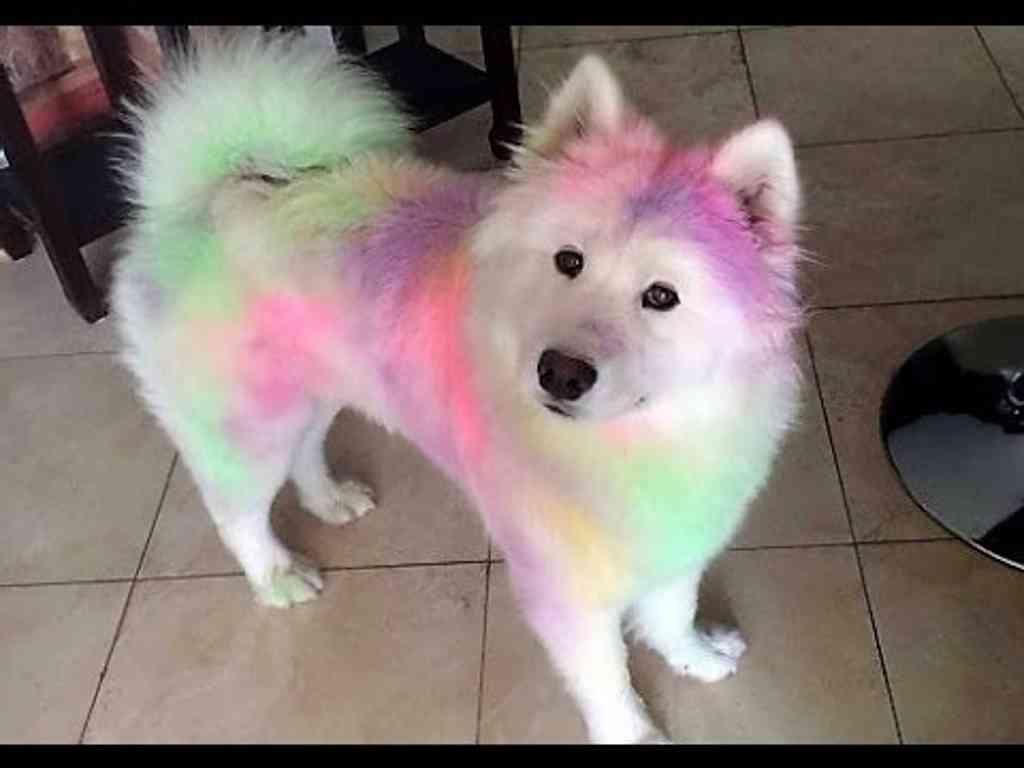 Wenn man Solche Hunde sieht muss man einfach mal laut lachen.