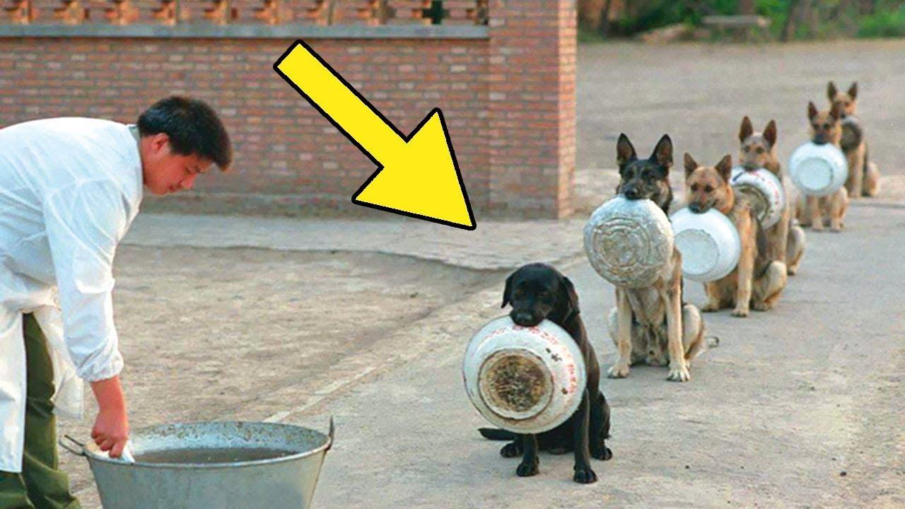Wenn man Tiere gut trainiert können sie so gut wie alles für jemanden machen.