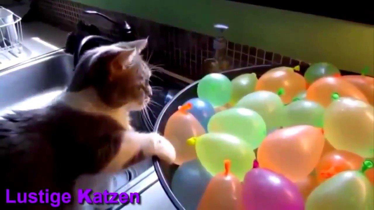 Wenn man selber eine Katze hat kann das auch passieren.
