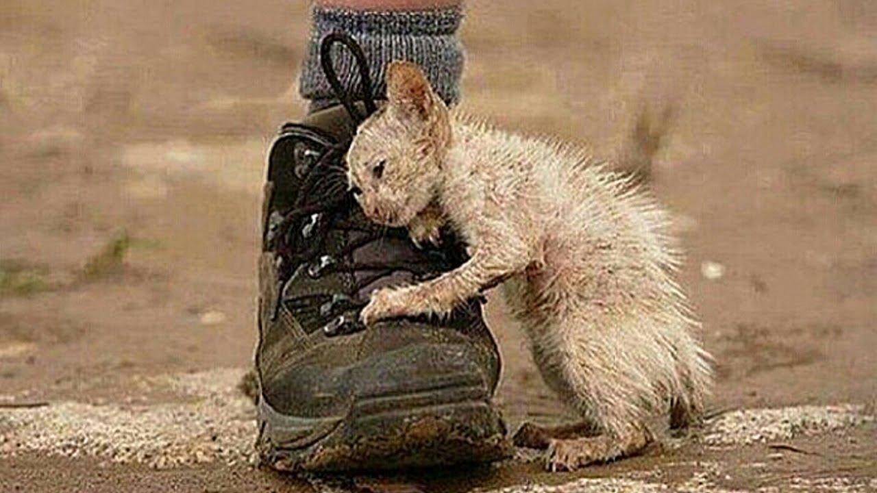 Es ist großartig solche Menschen zu sehen die Fremden Menschen oder Tiere retten.